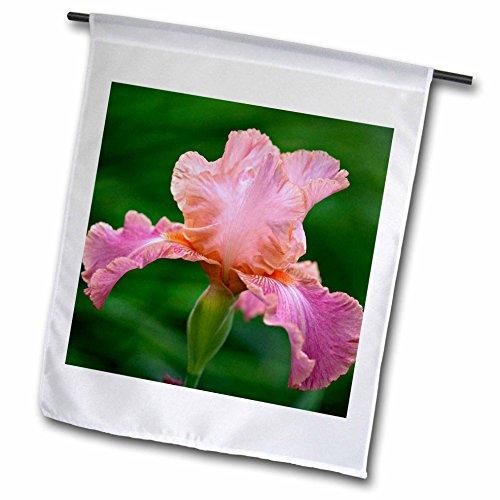 3dRose fl_83273_1 Hybrid Bearded Iris Flower, Louisville, Kentucky-NA01 AJE0110-Adam Jones Garden Flag, 12 by 18-Inch - Bearded Iris Flower