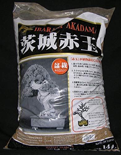 Akadama Ibaraky  Grano Medio