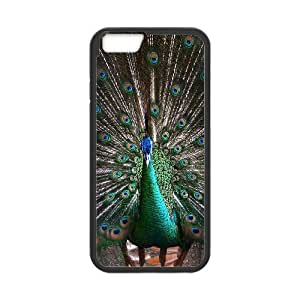 Colorful Peacock Feather iPhone 6 Plus 5.5 Inch Cell Phone Case Black LMS3880899