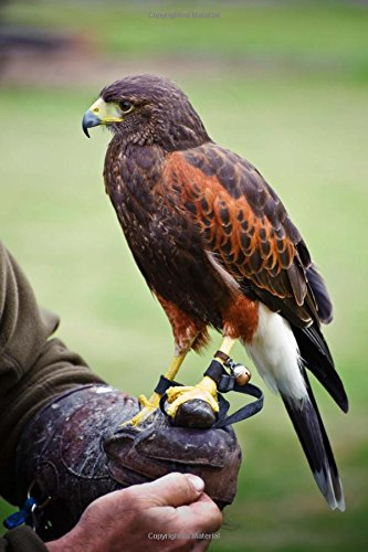 A Harris Hawk Bird of Prey Falconry Journal: 150 Page Lined Notebook/Diary (Harris Hawk Bird)