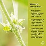 Banyan Botanicals Organic Ashwagandha Powder