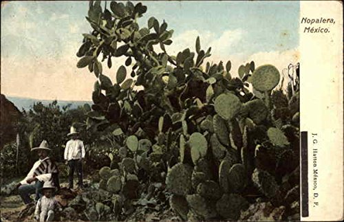 Three People by a Nopalera Plant Cactus & Desert Plants Original Vintage Postcard from CardCow Vintage Postcards