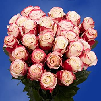 Amazon globalrose 75 fresh cut white roses with red tips globalrose 75 fresh cut white roses with red tips sweetness roses fresh flowers for mightylinksfo