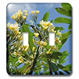Danita Delimont - Flowers - Indonesia, Island of Lombok. Lingsar Temple. frangipani tree. - Light Switch Covers - double toggle switch (lsp_225748_2)