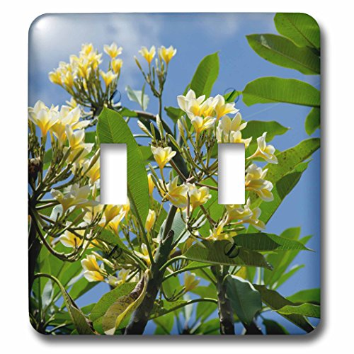 Danita Delimont - Flowers - Indonesia, Island of Lombok. Lingsar Temple. frangipani tree. - Light Switch Covers - double toggle switch (lsp_225748_2) by 3dRose