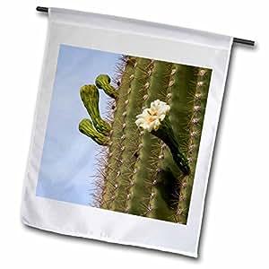 Danita Delimont–Cactus, Arizona, Tucson Mountain Park–banderas