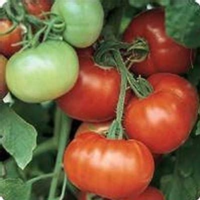 Tomato Garden Seeds - Super Fantastic Hybrid - Non-GMO, Vegetable Gardening Seed
