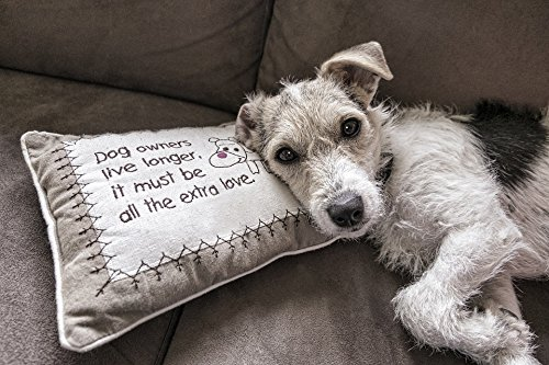 Home Comforts LAMINATED POSTER Read Canine Couch Pet Sofa Dog Animal Portrait Poster 24x16 Adhesive Decal