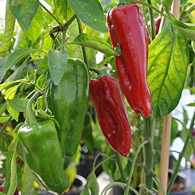 Sweet Marconi Rosso Pepper Seeds #SHTM (50) : Garden & Outdoor