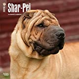 Shar Pei 2018 12 x 12 Inch Monthly Square Wall Calendar, Animals Dog Breeds