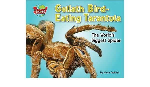 Goliath Bird Eating Tarantula The Worlds Biggest Spider