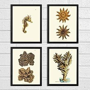51emLLyxRFL._SS300_ Seahorse Wall Art & Seahorse Wall Decor