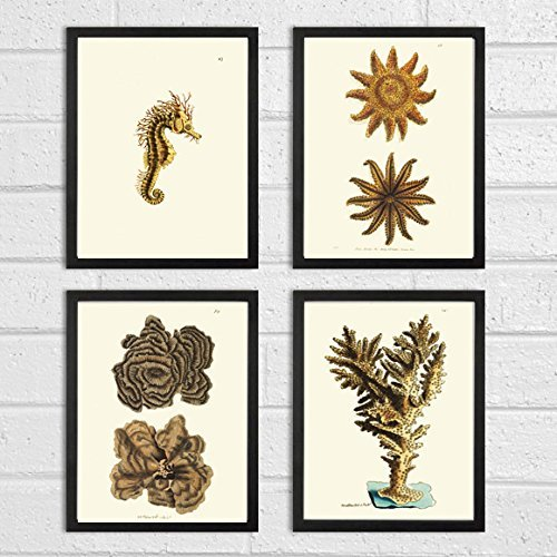 Antique-Coral-Print-Set-of-4-Art-Prints-Beautiful-Beige-Natural-Corals-Sea-Horse-Sea-Stars-Ocean-Marine-Nature-Bathroom-Bedroom-Beach-Home-Room-Wall-Decor-Unframed-NOD
