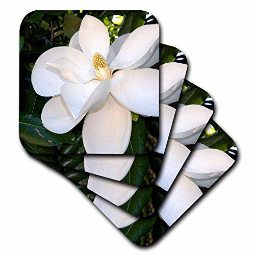 3dRose Magnolia Tree - Us04 Dfr0009 - David R. Frazier - Soft Coasters, Set of 4 (CST_88102_1)