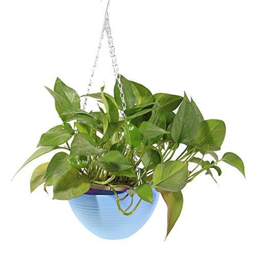Hanging Flower Plant Pot,Hmane Chain Plastic Basket Planter Holder Patio Home Decoration - 7.87x7.87x5.51inch