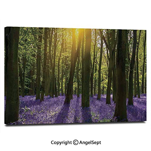 Modern Salon Theme Mural Sun Illuminates a Carpet of Bluebells Blooms Deep in Woodland in Oxfordshire Painting Canvas Wall Art for Home Decor 24x36inches,
