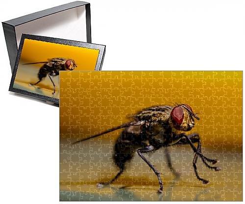 Photo Jigsaw Puzzle of Backyard Fly