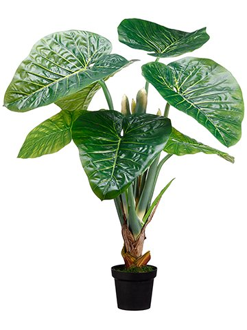 48'' Taro Plant in Pot knock-down Packing Green (pack of 2) by Arcadia Silk Plantation