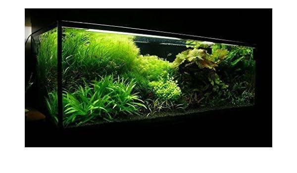 25 kg de sustrato de acuario natural negro (arena 1 - 1,6 mm) ideal para plantas.: Amazon.es: Productos para mascotas