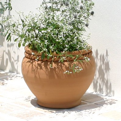 スペイン鉢  クリスティーナ 白い植木鉢 おしゃれ テラコッタ 陶器鉢 寄せ植えに最適  (35cm) B01LX6ZB1T   35cm