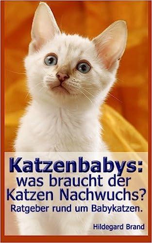 Katzenbabys Was Braucht Der Katzen Nachwuchs Ratgeber Rund Um
