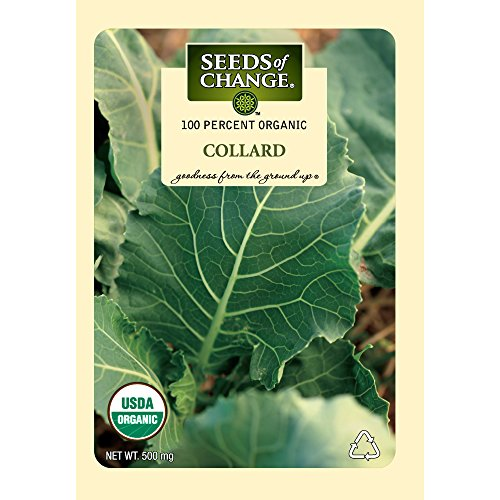 Seeds Change Certified Organic Collard product image