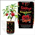 Moruga Scorpion Pepper - Grow Your Own Hottest Pepper in the World! - 2,000,000SHU 3oz/85gr