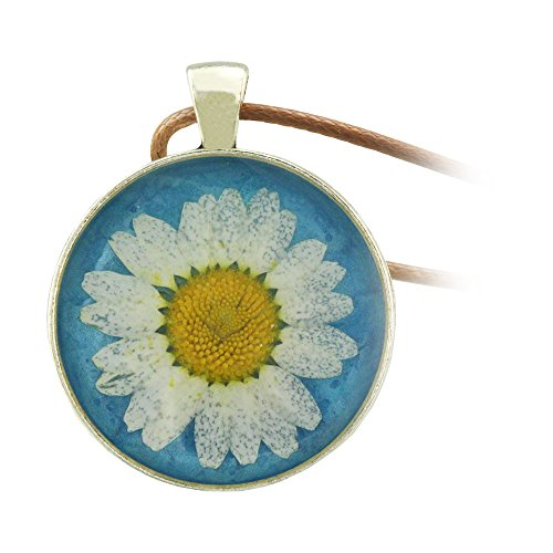 fm42-pressed-dried-daisy-flower-on-blue-background-round-pendant-necklace-fn2045