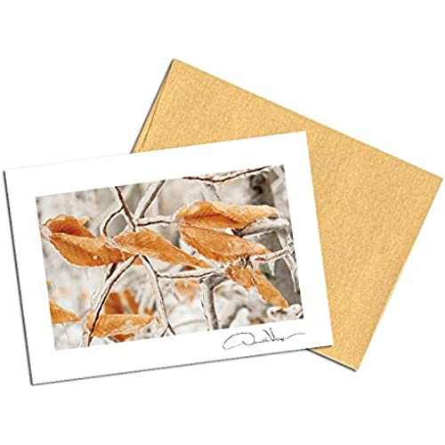 Elegant Frozen Leaves Note Cards. 3.5x5. Set of 8 Blank Cards with Matching Envelopes. Great Birthday Cards, Thank You Notes & Invitations. Best Quality Sales