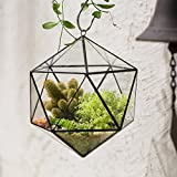 Modern Large Indoor Wall Hanging Icosahedron Glass Geometric Terrarium Tabletop Windowsill Decor Flower Pot Balcony Garden Micro Lnadschaft Open Planter Container for Succulent Air Plant Fern