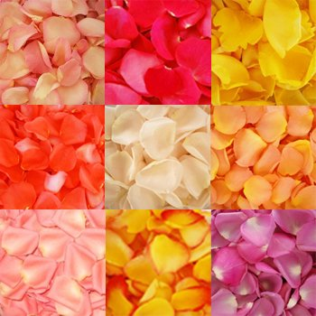 6000 Fresh Rose Petals Assorted by FarmDirect (Image #2)