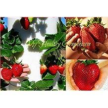 "SEEDS – Giant Strawberry ""Rubygem"" Dense, Upright, Everbearing Extra Large Fruit SHIPS FROM CANADA!"