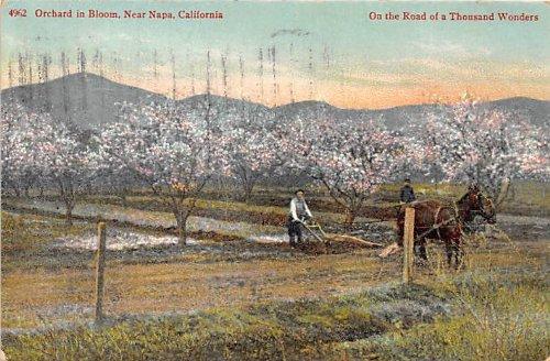 - Napa, California Postcard