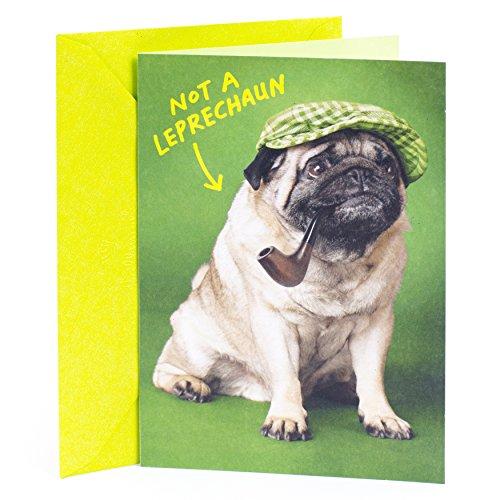 Hallmark Shoebox Funny St. Patrick's Day Greeting Card (Irish Pug Dog Joke)