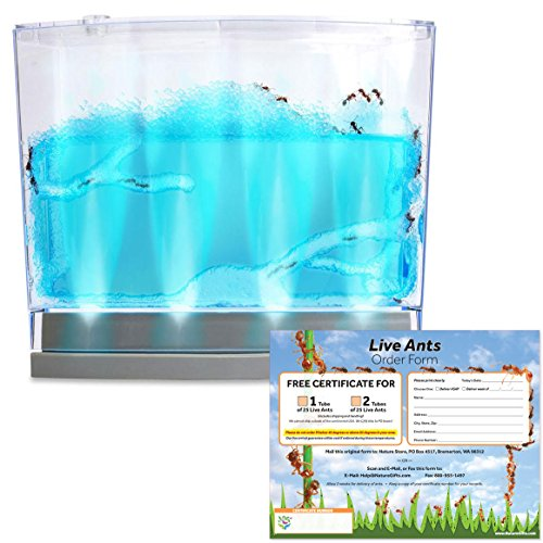 Lighted Blue Gel Ant Habitat with FREE Certificate for 25 Ants (1 Tube Ants) by Nature Gift Store