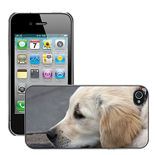 Bild Hart Handy Schwarz Schutz Case Cover Schale Etui // M00135763 Golden Retriever Golden Retriever // Apple iPhone 4 4S 4G