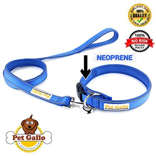 Reflective Dog Collar & Lead by PET GALLO: Padded Reflective 100% Pure Nylon Dog Collar With Reflective Nylon Pipe | Zinc alloy clip 7 & X-crossed reinforced double stitching on - X Glasses Reflect