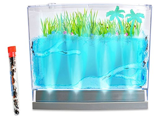 Live Lighted Ecosystem Ant Habitat Shipped with 25 Live Ants Now (1 Tube of Ants) - Lights Up by Nature Gift Store