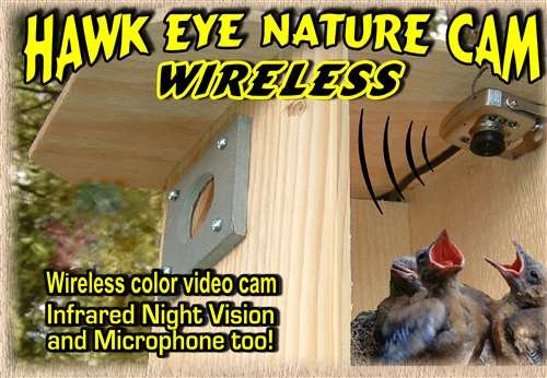 Hawk Eye Nature Cam, Wireless Birdhouse Spy Cam