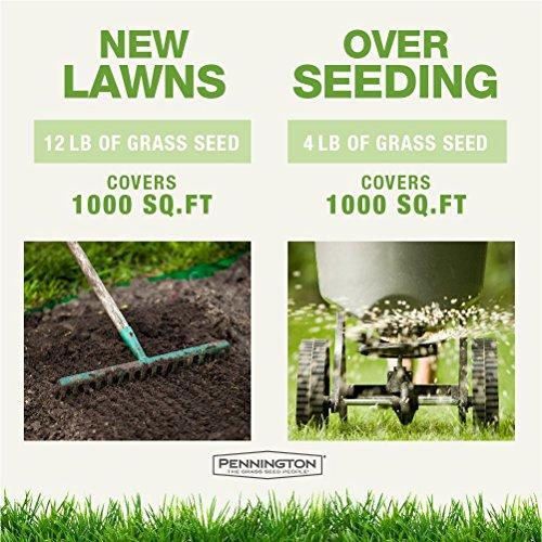 Pennington Smart Seed Dense Shade Grass Seed Mix - 7 LB