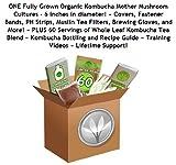 Make Kombucha Tea Starter Kit (Largest Kombcuha Cultures In North America + 1/4 Pound Kombucha Tea Blend + Gloves, Ph Strips, Tea Filters), Free Kombucha Starter Tea Included by GetKombucha.com