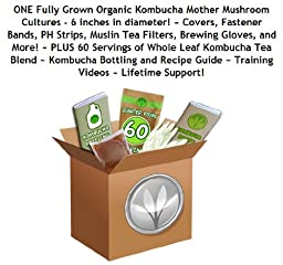 Make Kombucha Tea Starter Kit (Largest Kombcuha Cultures In North America + 1/4 Pound Kombucha Tea Blend + Gloves, Ph Strips, Tea Filters and More!), Free Kombucha Starter Tea Included by GetKombucha.com