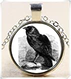 Retro crow Cabochon Bronze Glass Chain Pendant Necklace
