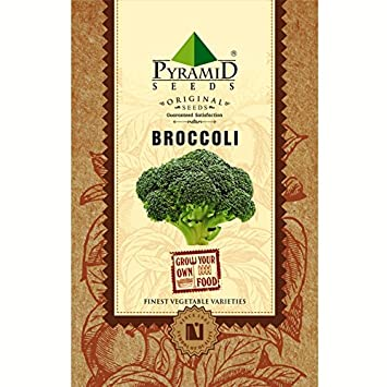 Pyramid Broccoli Seeds (400mg, Green)
