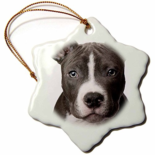 3dRose American Pit Bull Terrier Puppy Snowflake Porcelain Ornament, 3-Inch ()