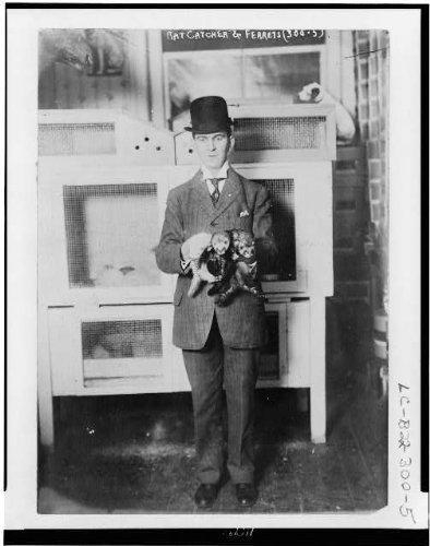 Photo: Rat catcher & ferrets,well dressed man,three ferrets,