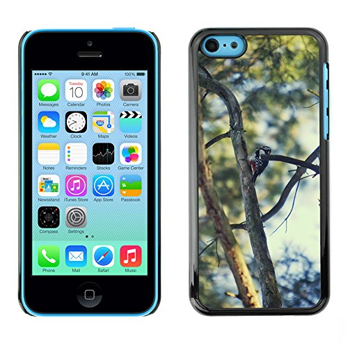 Just Phone Cases Hard plastica indietro Case Custodie Cover pelle protettiva Per // M00127869 Forêt Spruce Needles Sky Nature // Apple iPhone 5C