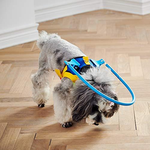 Arnés seguro para perros ciegos y mascotas, anilla anticolisión ...