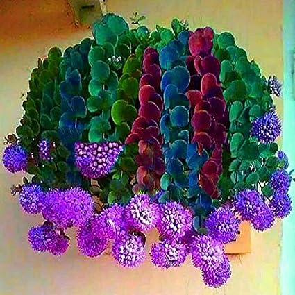 Fiori Piante.Cioler Seme Di Fiore 100 Pz Borsa Misto Colore Cactus Cipolla