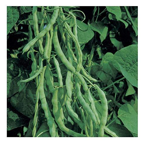David's Garden Seeds Bean Pole Kentucky Wonder OS3544A (Green) 50 Non-GMO, Heirloom Seeds